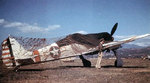 Fw190G-3 No.160057 was captured Gerbini Airfield Sicily in Sep 1943. It was painted in a striking white and red color scheme. Camouflage netting was to keep the Luftwaffe from destroying it.