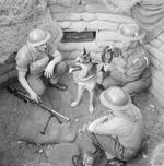 Troops of the British Eastern Command, date unknown; note Bren gun, ammunition carrier dog