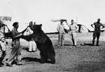 Troops of Polish 22nd Transport Artillery Company playing with Wojtek, Middle East, 1942