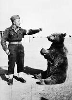 Wojtek the bear with a Polish soldier, Middle East, 1942
