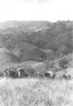 Men and pack mules of of US 5332nd Brigade (Provisional) in northern Burma, mid-Jan 1945