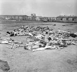 A pile of rotting corpses at the Bergen-Belsen Concentration Camp, 17 Apr 1945. Note some camp buildings in the background.