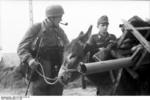 German soldier with a donkey, France, 1944; note Panzerschreck launcher and Kar98k rifle being carried by the animal