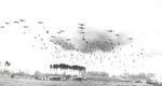 C-47 Skytrain aircraft of US 315th Troop Carrier Group dropping 41 sticks of 1st Polish Airborne Brigade into Grave, the Netherlands, 23 Sep 1944; note CG-4A gliders already on the ground. Photo 2 of 2.