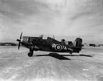British Martlet II (Wildcat) fighter at La Senia airbase, Oran, Algeria, 14 Dec 1942, photo 2 of 2