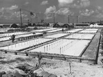 The largest of 37 American cemeteries at Tarawa, Gilbert Islands, Nov 1943; this cemetery was tended by US Navy Carpenter