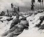 US Marines in prone position on the landing beach at Tarawa, Gilbert Islands, 20 Nov 1943, photo 1 of 2
