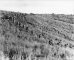 US Marines moving in a column over a hill on Guadalcanal, Solomon Islands, 10 Jan 1943