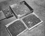 Boxes of gold caps and dentures removed from prisoners in Buchenwald Concentration Camps, near Weimar, Germany, Apr-May 1945