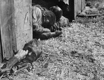 Massacred political prisoners in a barn, Gardelegen, Germany, 16 Apr 1945