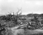 Vehicle path and combat-shattered vegetation in the rugged terrain of northern Iwo Jima, 21 Apr 1945, photo 1 of 2
