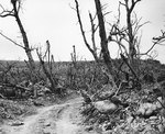 Vehicle path and combat-shattered vegetation in the rugged terrain of northern Iwo Jima, 21 Apr 1945, photo 2 of 2