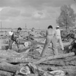 Japanese-American internees cutting a red oak log, Jerome War Relocation Center, Arkansas, United States, 17 Nov 1942