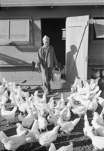 Mori Nakashima feeding chickens, Manzanar Relocation Center for Japanese-Americans, Owens Valley, California, United States, 1943