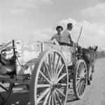 Mule wagon at Jerome War Relocation Center, Arkansas, United States, 18 Nov 1942, photo 2 of 6
