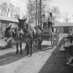 Mule wagon at Jerome War Relocation Center, Arkansas, United States, 18 Nov 1942, photo 4 of 6