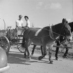 Mule wagon at Jerome War Relocation Center, Arkansas, United States, 18 Nov 1942, photo 5 of 6