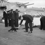 Winston Churchill petting the mascot of HMS Prince of Wales, Blackie, during the Atlantic Charter Conference, Placentia Bay, Newfoundland, Aug 1941