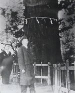 Emperor Showa (Hirohito) gazing at the Cryptomeria tree