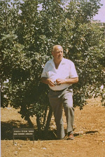 Oskar Schindler standing next to the tree planted in honor of his rescue efforts, Yad Vashem, Jerusalem, Israel, 1970