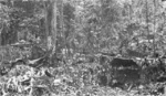 M3 Gun Motor Carriage of US 7th Marine Regiment at Hill 660 on New Britain, Bismarck Islands,