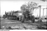 German SdKfz. 7 half-track vehicle towing 15 cm sFH 18 field gun, Italy, Jan 1944