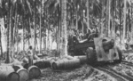 US Marine Corps 155 mm Howitzer Carriage M1917 or M1918 howitzer under tow, Rendova, Solomon Islands, 7 Jul 1943