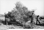 Camouflaged German 3.7 cm Flakzwilling 43 anti-aircraft mount, northern France, Jul-Sep 1943, photo 2 of 2