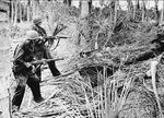 Soldiers of US 32nd Division probing a Japanese foxhole at New Guinea, Dec 1942; note M1 Garand rifles