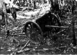 Abandoned Japanese Type 94 37mm anti-tank gun, Guadalcanal, Solomon Islands, Nov 1942